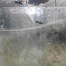 Фотографии с пасеки